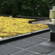 Den passenden Dachdecker für Ihr Gründach