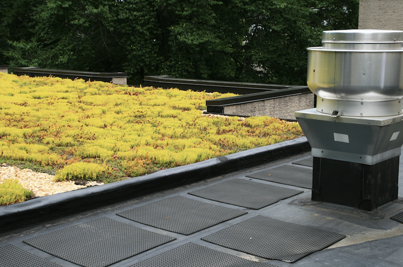 Atemberaubend Dachbegrünung: Viele Vorteile für Sie und die Umwelt - MeinDach @NX_18