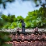 ein schwarzer Vogel auf einem Dach