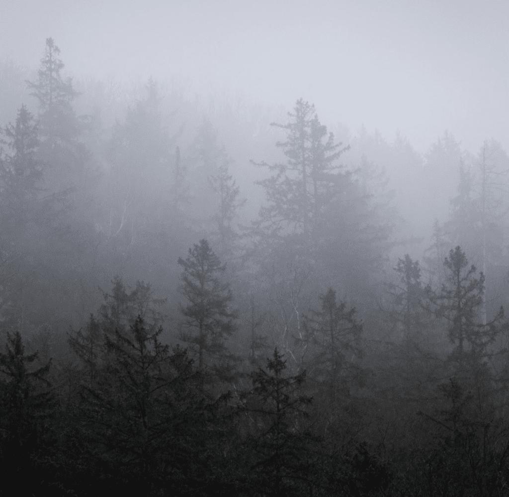 Ein Wald in Deutschland, Quelle für Dachmaterialien